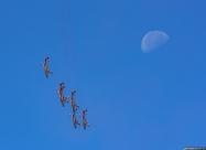 Bialo-Czerwone Iskry and the Moon