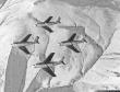 Arctic Gladiators F-86F Sabre