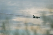 Saudi Hawks Bae Hawk Mk.65