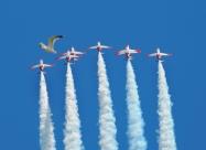 Patrulla Aguila C-101 Aviojet