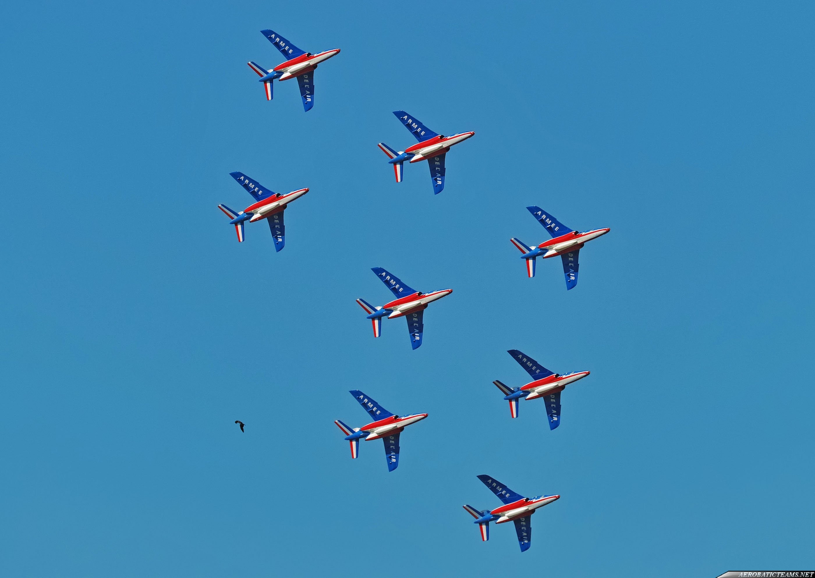 Patrouille de France vs bird